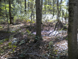 This water-filled crater in the woods of Charlestown, R.I., is where a navy Hellcat fighter crashed on May 14, 1944.